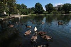 Círculo da universidade de Cleveland Ohio fotos de stock