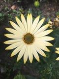 Círculo de color amarillo de la flor imágenes de archivo libres de regalías