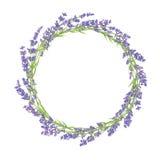 Círculo de flores da alfazema ilustração royalty free