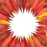 Círculo de hojas coloreadas Fotos de archivo