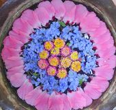 Círculo de la flor Foto de archivo libre de regalías