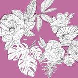 Círculo de plantas tropicais Imagem de Stock