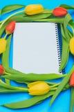 Círculo de tulipas vermelhas e amarelas no fundo pastel azul Fotos de Stock Royalty Free