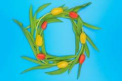 Círculo de tulipas vermelhas e amarelas no fundo pastel azul Foto de Stock Royalty Free