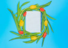 Círculo de tulipas vermelhas e amarelas no fundo pastel azul Imagem de Stock