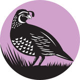 Círculo del pájaro de las codornices del valle de California retro ilustración del vector