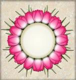 Círculo del tulipán Imagenes de archivo