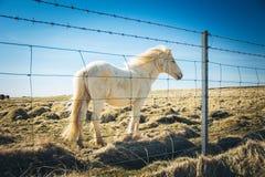 Círculo dourado, Islândia Fotografia de Stock