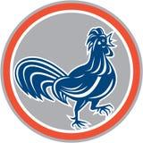 Círculo que camina del gallo del pollo retro Imagen de archivo libre de regalías