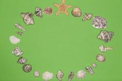 Círculo redondo com shell diferentes do mar Fotos de Stock Royalty Free