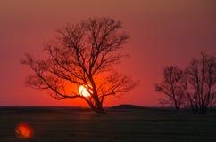 Círculo rojo del sol de la puesta del sol de la silueta del árbol Imagen de archivo libre de regalías