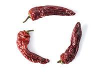 Círculo secado de Chili Peppers Fotos de archivo