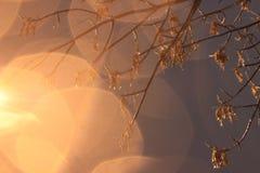 Círculos alaranjados brilhantes do bokeh de uma lanterna no outono fotografia de stock