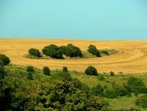 Círculos da colheita Imagem de Stock