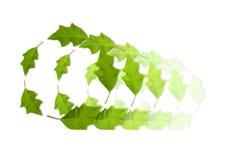 Círculos das folhas Fotografia de Stock Royalty Free