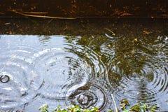 Círculos de descensos del agua en un charco en la lluvia fotografía de archivo libre de regalías