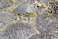 Círculos de madera Foto de archivo libre de regalías
