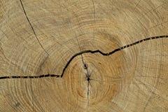 Círculos de uma árvore Foto de Stock Royalty Free