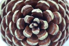 Círculos de un cono del pino Foto de archivo libre de regalías