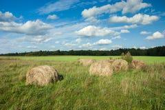 Círculos do feno em um prado verde imagens de stock