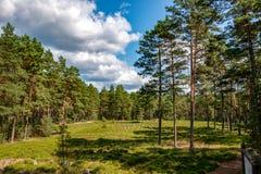Círculos do poder - túmulos antigos na floresta muito velha do pinho fotografia de stock royalty free