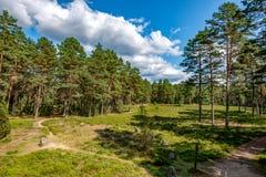 Círculos do poder - túmulos antigos na floresta muito velha do pinho foto de stock