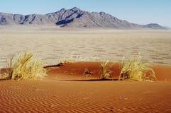 Círculos feericamente no deserto, Namíbia Imagens de Stock Royalty Free