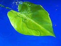 Círculos y hoja verde. Fotos de archivo