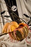 Cóctel del partido de la calabaza Foto de archivo libre de regalías