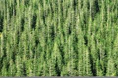 Código de barras Spruce del bosque fotografía de archivo