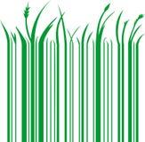 Código de barras verde Imágenes de archivo libres de regalías