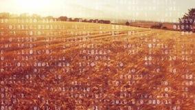 Códigos binarios en un campo almacen de video