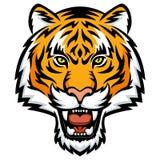 Cólera del tigre Imagen de archivo libre de regalías