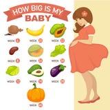 Cómo es grande es mi bebé Infographic embarazada libre illustration