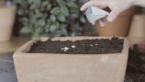 Cómo a la sierra en una cacerola de la semilla almacen de video