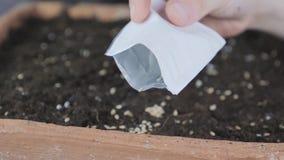 Cómo a la sierra en una cacerola vieja de la semilla hecha de ladrillo almacen de video