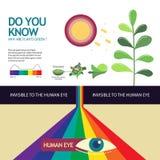 Cómo usted sabe porqué es el verde de la planta Imágenes de archivo libres de regalías