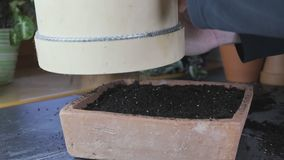 Cómo utilizar un tamiz de madera del jardín para sembrar el suelo o medios de crecimiento almacen de video