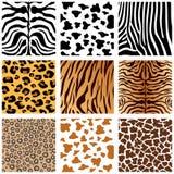 Cópia animal Imagens de Stock