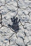Cópia da palma em uma superfície do deserto Imagens de Stock