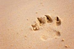 Cópia da pata do cão na praia fotos de stock