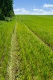 Cópia da roda no campo de trigo Imagem de Stock