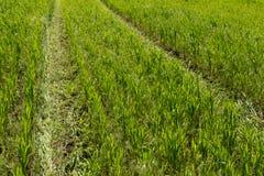 Cópia da roda no campo de trigo Imagens de Stock