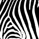 Cópia da zebra Imagem de Stock