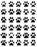 Cópia das patas dos gatos Fotos de Stock