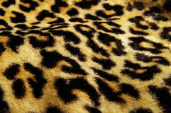 Cópia do leopardo Foto de Stock
