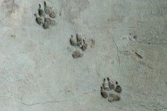 Cópia do pé do cão Foto de Stock Royalty Free