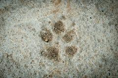 Cópia do pé do cão Fotos de Stock Royalty Free