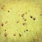 Cópia do Wildflower no papel antigo Fotografia de Stock Royalty Free