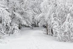 Cópia-espaço bonito do inverno Scene imagens de stock